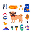 pet care concept cute pug and dog care goods on vector image