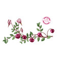 hand drawn cranberry plant vector image vector image