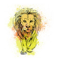 sketch pen a lion head on a background of vector image vector image