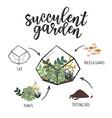 succulent garden infographic vector image vector image