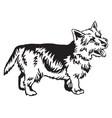 decorative standing portrait of norwich terrier vector image vector image