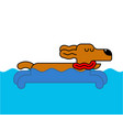 dog swimming isolated home pet in water vector image