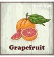 Fresh fruit sketch background Vintage hand vector image vector image