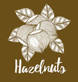 Hazelnut with leaves background vector image