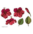 set hand drawn colored hibiscus vector image