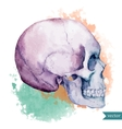 Nice skull vector image vector image
