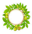 walnut branches frame on white background vector image vector image