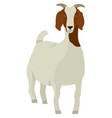 farming set white and brown boer goat vector image vector image