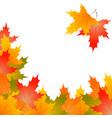 frame of autumn maple leaves on a white background vector image