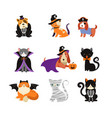 happy halloween - cats and dogs in monsters vector image