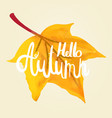 hello autumn calligraphy by hand on a maple leaf vector image