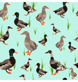 seamless texture with ducks vector image
