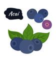 super food acai berry exotic amazon nutrition vector image vector image