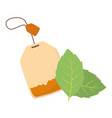 tea time teabag leaves herbs beverage design vector image