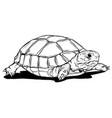 turtle icon cartoon turtle vector image vector image