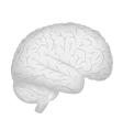 Grey human brain vector image