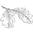 oak tree branch vector image