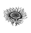 sunflower hand drawn ink pen vector image vector image