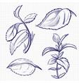 ballpoint pen sketch of mint medicine herb vector image vector image