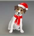 dog jack russell terrier vector image