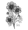 engraved cosmos isolated on white vector image vector image