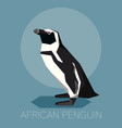 flat african penguin vector image vector image