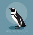 flat african penguin vector image