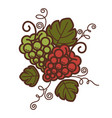 grape vine vintage wine production or vector image vector image