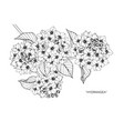 hydrangea flower drawing vector image vector image
