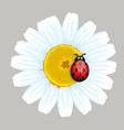 Ladybug and Daisy vector image vector image