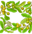 shea branches frame on white background vector image vector image