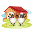 Two black sheeps with a barn at the back vector image vector image