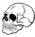 black and white another skull vector image vector image