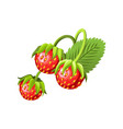 hand drawn branch strawberry berries with leaves vector image