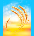 nature sunset background with ears wheat vector image