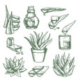 set isolated aloe vera sketch and hand drawn vector image