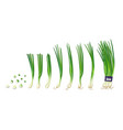 spring onions collections isolated on white vector image vector image