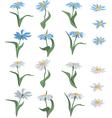 set of chamomiles vector image