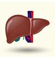 Human liver cartoon design vector image