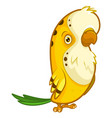 funny yellow parrot with a small beak vector image vector image