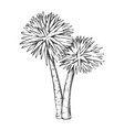 sabal palm exotic tropical trees monochrome vector image vector image