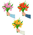 tulips in the hand of man vector image vector image