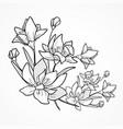 flower branch on white vector image vector image