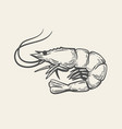 prawn or shrimp vector image vector image