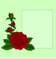 bouquet red roses design frame with floral vector image vector image