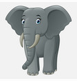 cute baby elephant isolated on white background vector image vector image