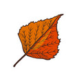 leaf autumnal symbol isolated icon shape vector image vector image