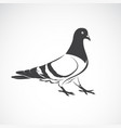 pigeon design on white background bird icon vector image