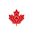 red canada maple leaf vector image