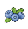 beautiful cartoon red blueberry with black contour vector image vector image